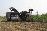Récolte mécanisée de la canne à sucre. ©Gregory Lesturgez