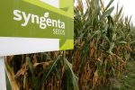 syngenta seeds semences