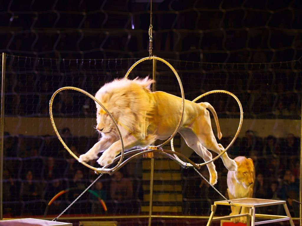 animaux sauvages cirques